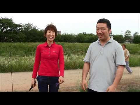 無農薬ラベンダー(切り花)生産で有名な埼玉県・蓮見さんの畑その1
