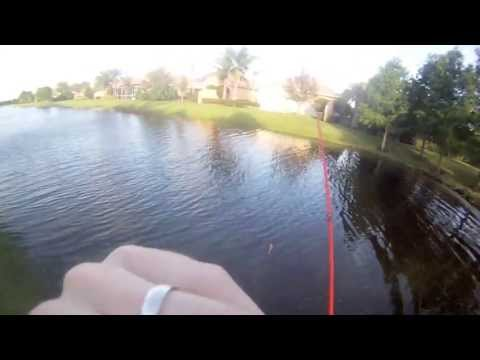 Bass Fishing- Pitching Blue Gill Lures