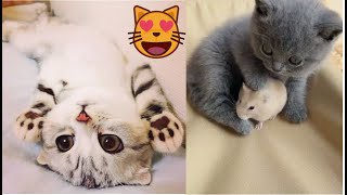 Cute baby animals  cute moment of the animals - Cutest Animals Videos Compilation#2