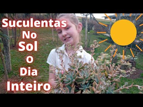 , title : 'Suculentas No Sol  O Dia Inteiro | Fácil Cultivo | E Bem Coloridas