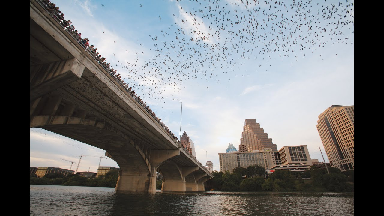 Bat Fest 2021