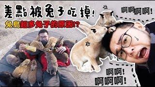【差點被兔子吃掉!兔島超多兔子的原因? 日本Vlog 】狸貓