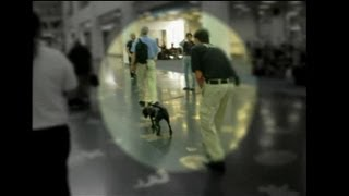 GAO: TSA's Passenger Screening Canine Detects Explosive Training Device Inside Airport Terminal