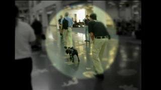 GAO: TSA's Passenger Screening Canine Detects Explosive Training Device Inside Airport Terminal
