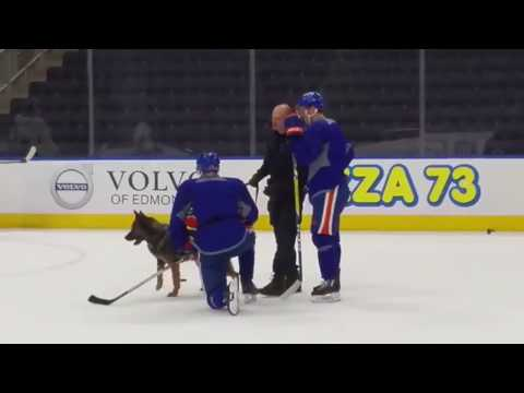 Gotta See It: Bring your dogs to work day for Oilers