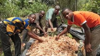 Reportage au sein de la SCEB, coopérative de producteurs de cacao en Côte d'Ivoire partenaire du