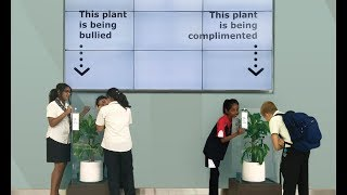 Bully A Plant: Say No To Bullying
