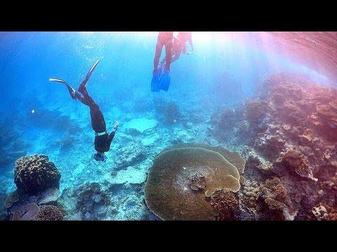 Αυστραλία: Ο Μεγάλος Κοραλλιογενής Ύφαλος κινδυνεύει