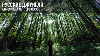 Русские джунгли. Атмосфера летнего леса. FPV приключения.