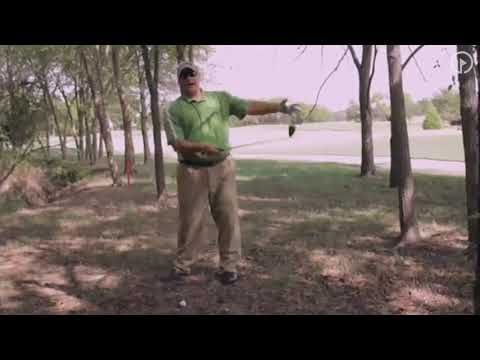 Limit Losses and Play Smart Out of Trees