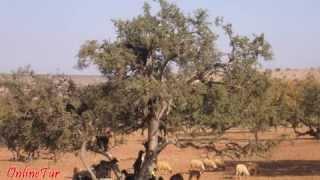 preview picture of video 'Отдых в Марокко c OnlineTur.ru'