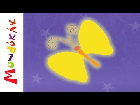 pillangó zeugma tui