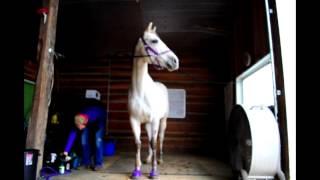 Managing a Horse Boarding Facility