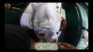 #香港釣魚 夏季港水、蠔排、外海
