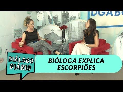 Diálogo Diário recebe bióloga para falar sobre invasão de escorpiões