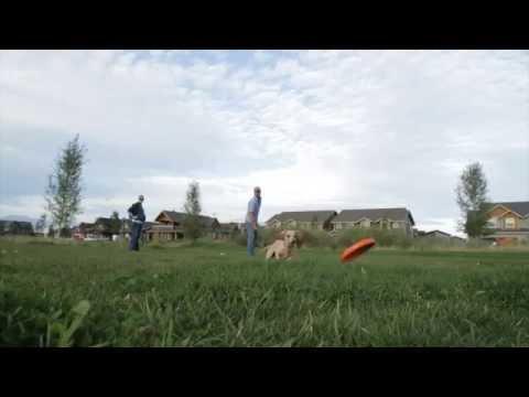 WEST PAW Zogoflex Игрушка для собак Zisc Video #1