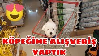 Köpeğime Alışveriş Yaptık Sonra da Kuduz Aşısı :) [Maltese Terrier]