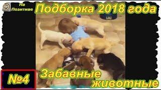 Забавные животные . Выпуск №4 .  ( Подборка 2018 года)