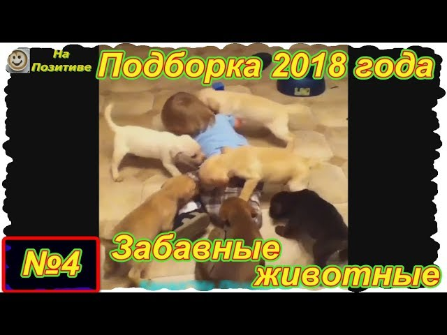 Забавные животные . Выпуск №4 . Щенки и дети ( Подборка 2018 года)
