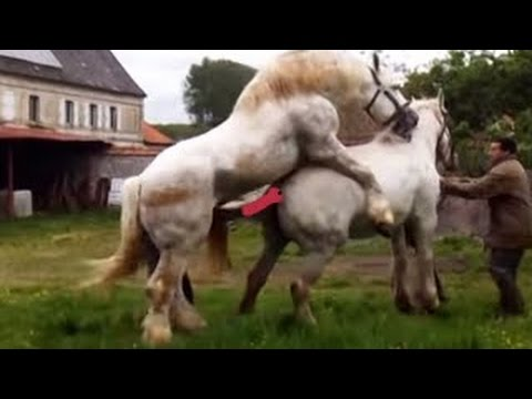 horse breeding Horse mating 2015