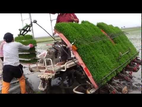 Video Awesome!!! Cara Menanam Padi dengan Mesin Di Jepang