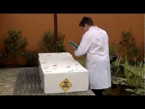 Ang mga resulta ng mga pagsusuri ng dugo sa mga worm