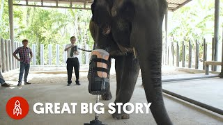 بالفيديو: تعرف إلى موشا .. أول فيل يمشي على طرف صناعي في العالم !
