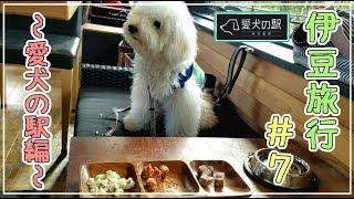 ★#7TORIZ家の伊豆旅行!!全10回~愛犬の駅にてそらも豪華ランチタイム♪~ボタン・オカメ・ウロコインコ・ビションフリーゼ