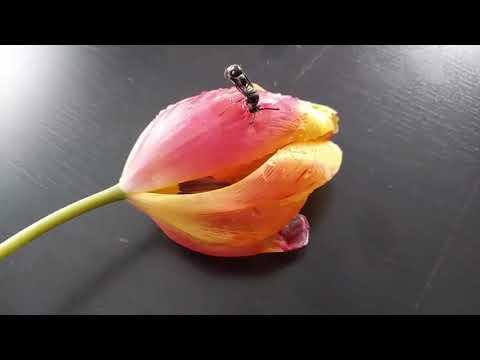 Papillon zeugma belek 5*