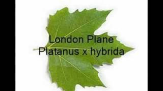Leaf identification of common trees