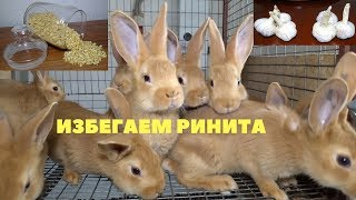 Чеснок в профилактике ринита кроликов
