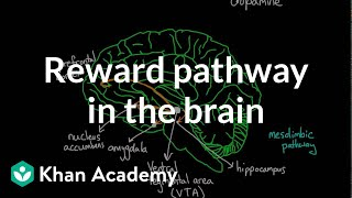 Reward pathway in the brain   Processing the Environment   MCAT   Khan Academy