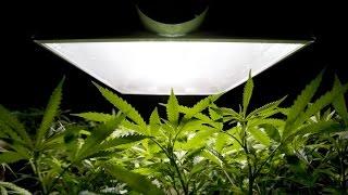 Выращивание марихуаны. Советы от Бога.