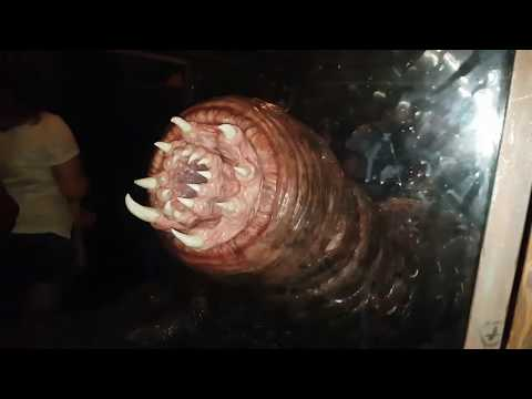 Giant Man Eating Death Worm!! King Kong Skull Island Carnictus Worm