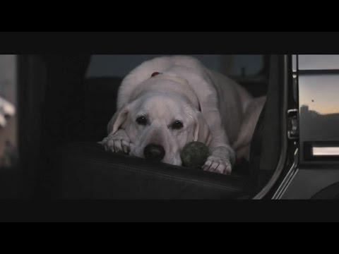 Emocionante: O cão é mesmo o seu melhor amigo...