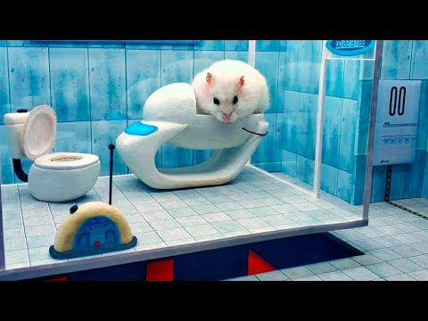 Hamster Takes on a Maze Obstacle Course