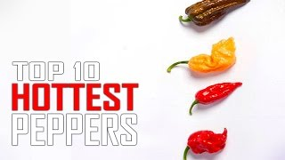 Top 10 World's Hottest Peppers in the WORLD!  Is Ghost Pepper #1?