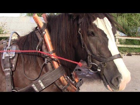 Wie wir unser Pferdegeschirr reinigen...und erfolgreich zur Schau stellen!