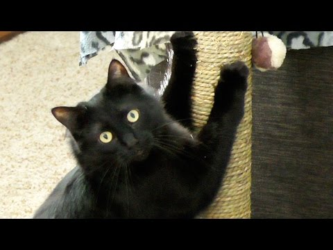 9 Reasons Black Cat Owners are Lucky!
