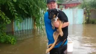 Уссурийск/Наводнение 2017/успели спасти собак
