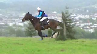 Erfahrungswerte für Pferd und Reiterin in Baar