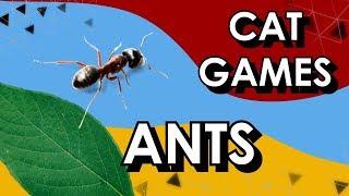 Cat Game Ants