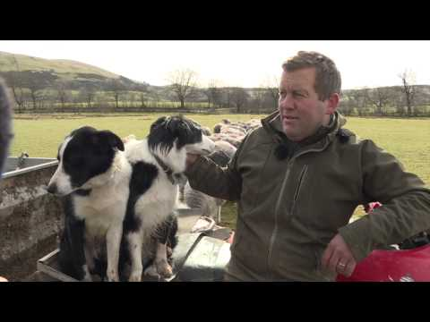 A Day with the Tweeting Shepherd @herdyshepherd1