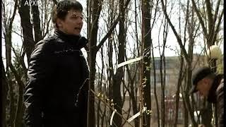 Посади дерево — врятуй місто. У Дніпрі триває акція з озеленіння дворів.