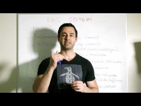 Vücut Kas Sistemine Giriş - Kaslar Nasıl Çalışır, Kas Lifi Tipleri Nelerdir?