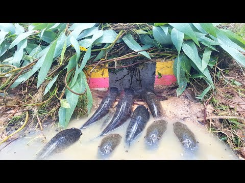 Wow! Amazing Human Make Deep Hole Trap - How To Make Simple Fish Trap