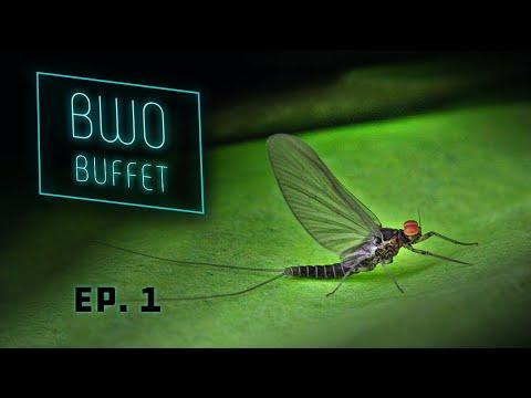 BWO Buffet - Green River's #1 Hatch - Utah Dry Fly Fishing