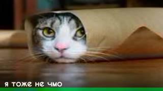 Великая реп битва кот в фтулке VS лежающи кот