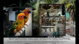 AVIARY BIRD SHOP EXOTIC PARROTS SUPPLIES SUPPLY MIAMI FLORI