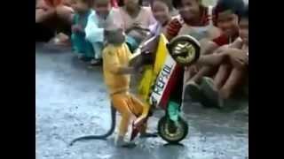 Macaco anda de motocicleta e impressiona a todos